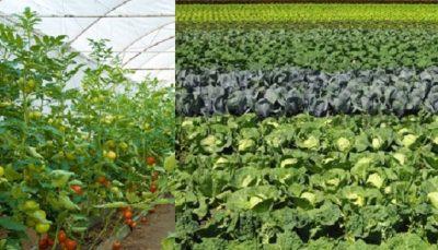 किसान चेतना : रासायनिक विषादीको खपत घट्यो